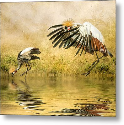 Metal Print featuring the photograph Grey Crowned Cranes by Brian Tarr