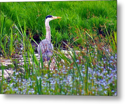 Grey Heron Metal Print by Trevor Kersley