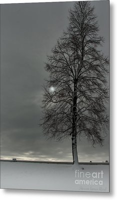 Metal Print featuring the photograph Grey Morning by Steven Reed