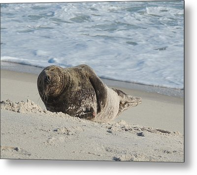 Grey Seal Pup On Beach Metal Print by Kimberly Perry
