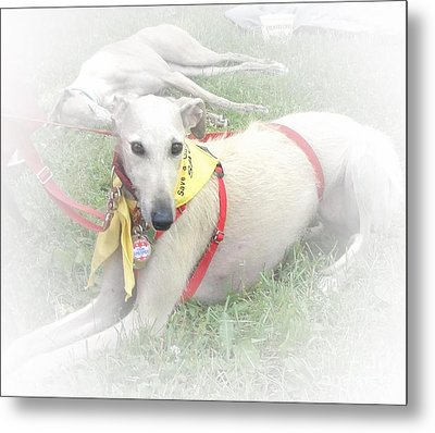 Greyhound Rescue 7 Metal Print