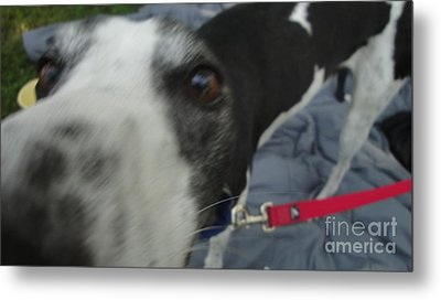 Greyhound Rescue 9 Metal Print