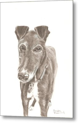 Greyhound Metal Print