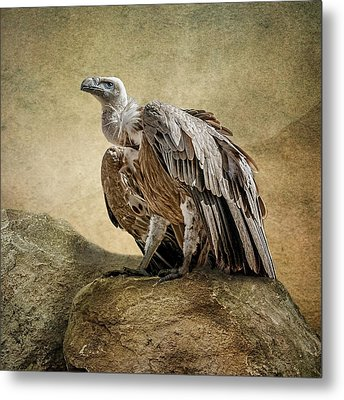 Metal Print featuring the photograph Griffon Vulture by Brian Tarr