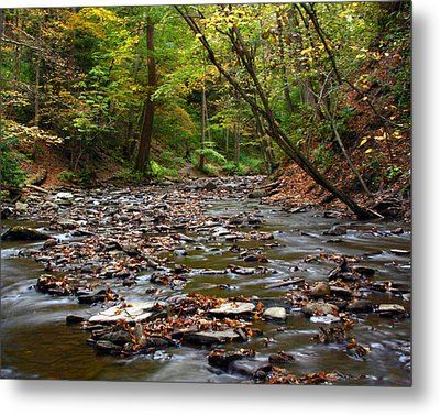 Creek Walk Metal Print