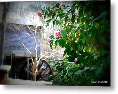 Metal Print featuring the photograph Grist Mill Roses by Tara Potts