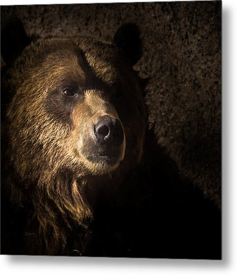 Grizzly 2 Metal Print