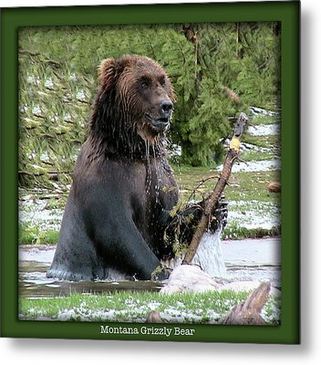 Grizzly Bear 07 Metal Print by Thomas Woolworth