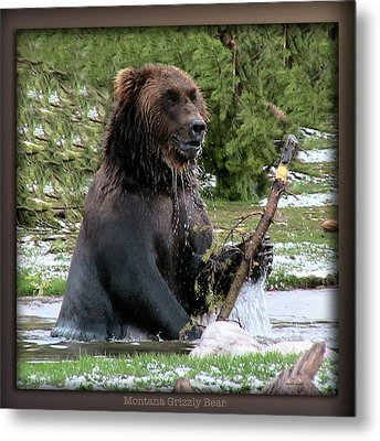 Grizzly Bear 08 Metal Print by Thomas Woolworth