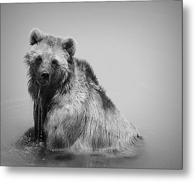 Grizzly Bear Bath Time Metal Print