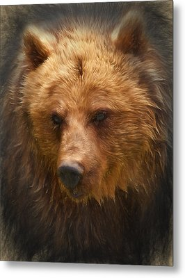 Grizzly Bear Metal Print