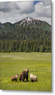 Grizzly Bear Mother And Cubs In Meadow Metal Print by Richard Garvey-Williams