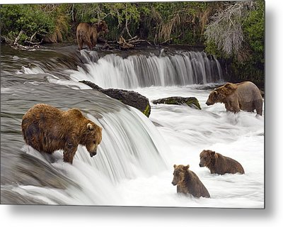 Grizzly Bears Fish At Brooks Falls In Metal Print