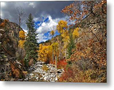 Grizzly Creek Cottonwoods Metal Print by Jeremy Rhoades