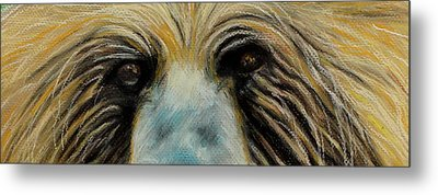 Grizzly Eyes Metal Print by Jeanne Fischer