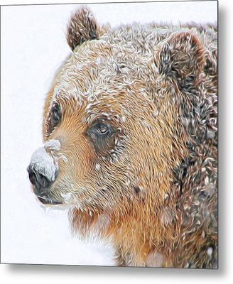 Grizzly Frost Metal Print