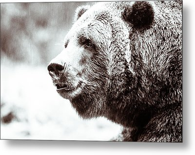 Grizzly In Black And White Metal Print by Wade Brooks