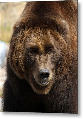 Metal Print featuring the photograph Grizzly by Steve McKinzie