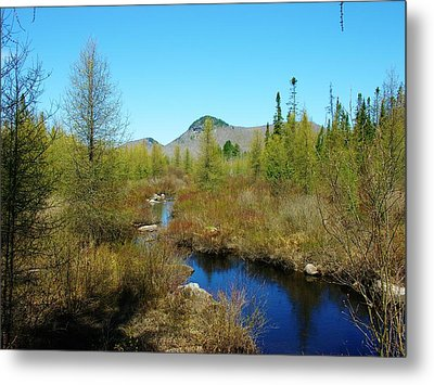 Metal Print featuring the photograph Groton State Forest Moose Country by Sherman Perry
