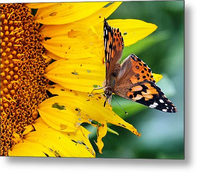 Ground Control Metal Print by Cathy Donohoue