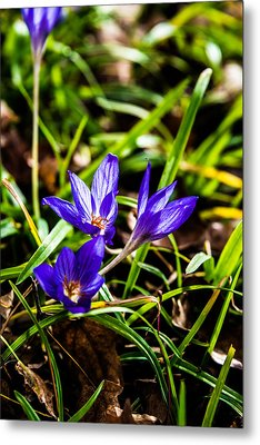 Metal Print featuring the photograph Hocus Crocus by Dee Dee  Whittle