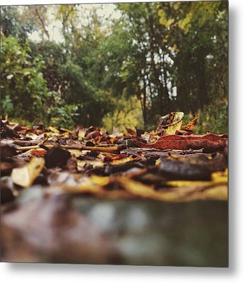 Metal Print featuring the photograph Ground Level Leaves by Nikki McInnes