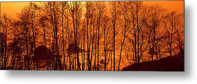 Grove Of Alder Trees In Humboldt Metal Print by Panoramic Images