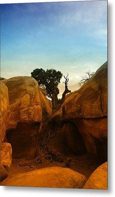 Growing Between The Rocks Metal Print by Jeff Swan