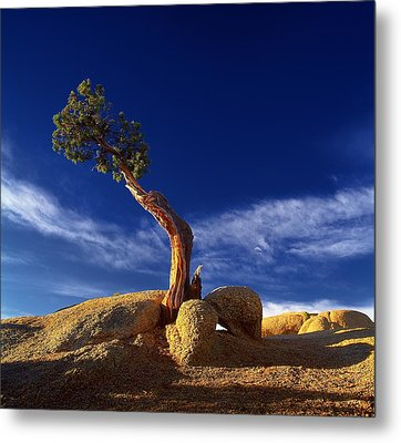Growing In Rock 2 Metal Print