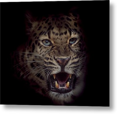 Growl Metal Print by Cheri McEachin