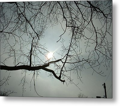 Grown In Cold Light Metal Print by Marc Philippe Joly