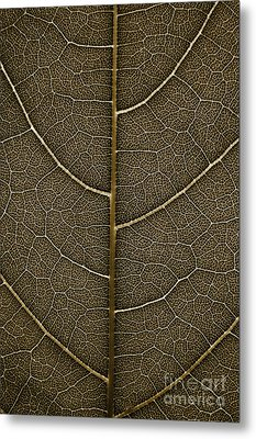 Metal Print featuring the photograph Grunge Leaf Detail by Carsten Reisinger