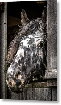 Guard Horse-what's The Password? Metal Print
