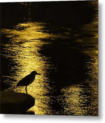 Guarding The Gold Metal Print by Kathy Ponce