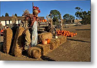 Metal Print featuring the photograph Guarding The Pumpkin Patch by Michael Gordon
