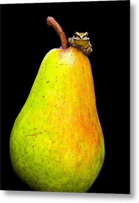 Guest A-pear-ance Metal Print by Jean Noren