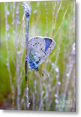 Guilded Blue Metal Print by KD Johnson
