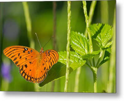 Metal Print featuring the photograph Gulf Fritillary by Jane Luxton