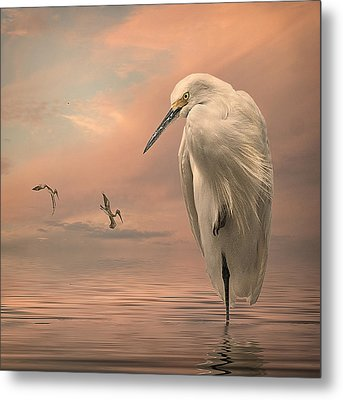 Metal Print featuring the photograph Gulf Sunset by Brian Tarr