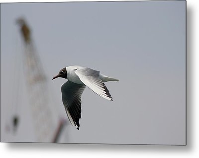 Gull And Crane Metal Print by Frederic Vigne