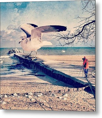 #gull #beautiful #bird #seagull #water Metal Print