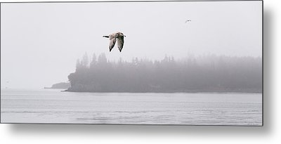 Gull In Flight Metal Print by Marty Saccone