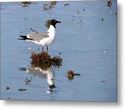 Metal Print featuring the photograph Gull In Seaweed by Linda Cox