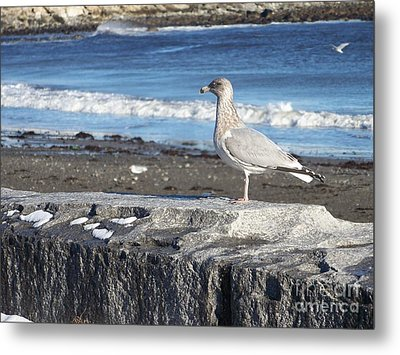 Seagull  Metal Print by Eunice Miller