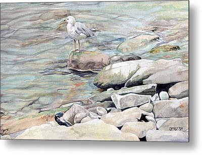 Gull On The Rocks Metal Print