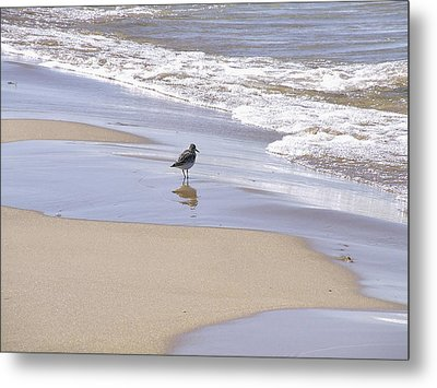 Gull On The Shore Metal Print by Richard Gregurich