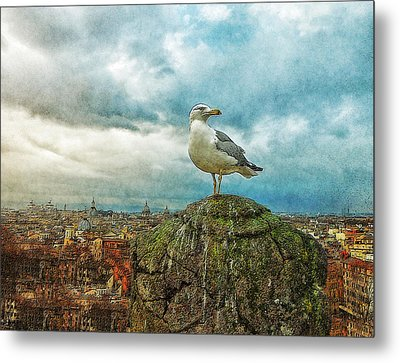 Gull Over Rome Metal Print by Jack Zulli