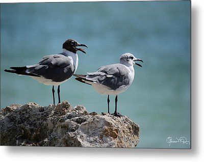 Gull Talk Metal Print