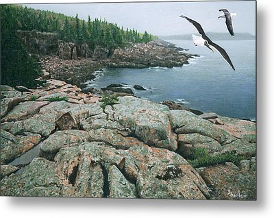 Gulls At Monument Cove Metal Print by Brent Ander