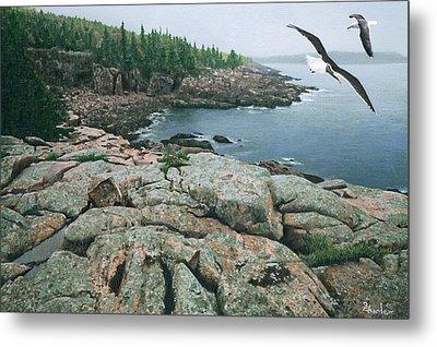 Gulls At Monument Cove Metal Print